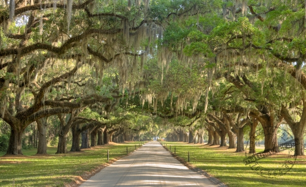 boone-hall-plantation